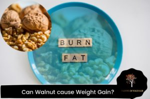 Can Walnut cause Weight Gain?