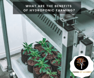 What are the benefits of Hydroponic Farming?